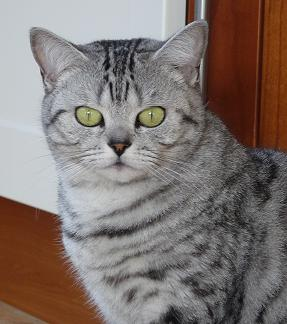 Tekyni's Silver Amber