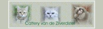 banner_zilverdistel-2